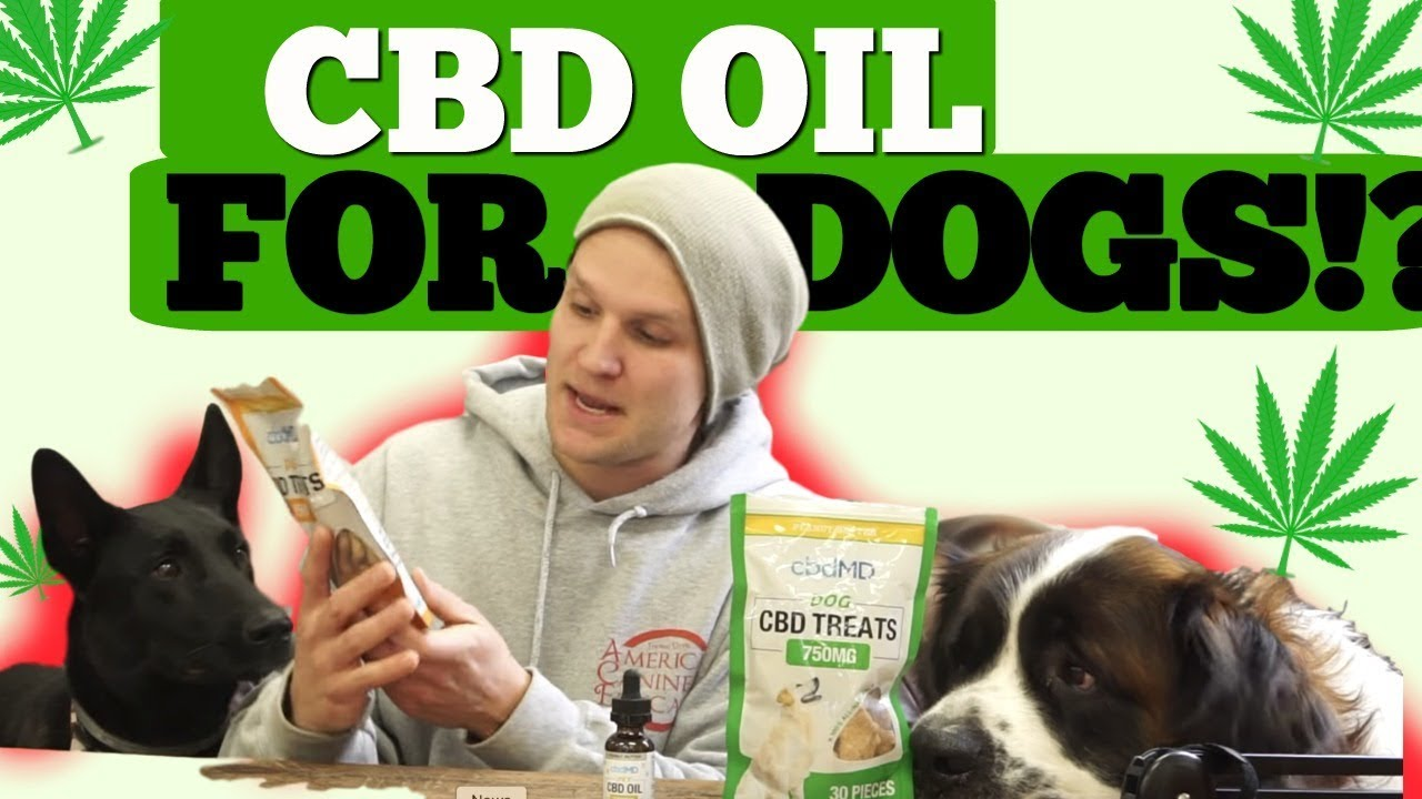 Is CBD oil safe for DOGS?- Should you use CBD oil for your dog? 1