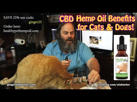 Full Spectrum CBD Hemp Oil Benefits for Cats & Dogs Health 1