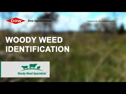 Woody Weed Specialists Tips - Weeds identification 1