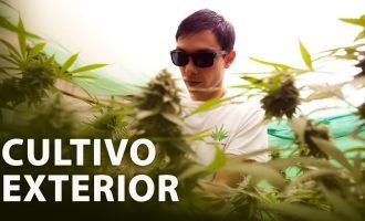 Cultivo de Marihuana Exterior I Paso a Paso 10