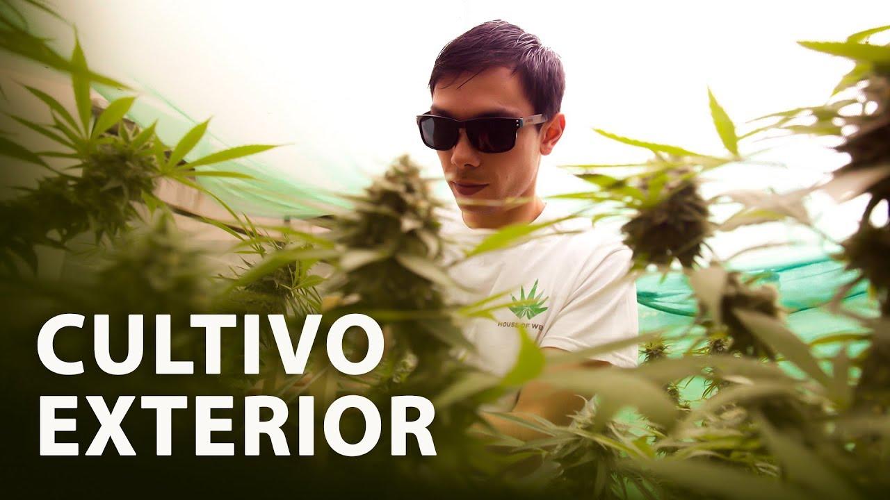 Cultivo de Marihuana Exterior I Paso a Paso 1
