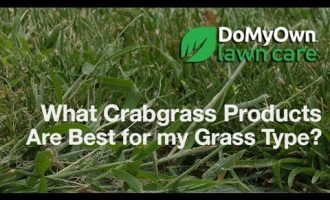 What Crabgrass Products Are Best for my Grass Type? - Weed Control Tips | DoMyOwn.com 5