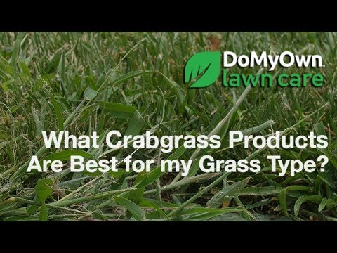 What Crabgrass Products Are Best for my Grass Type? - Weed Control Tips | DoMyOwn.com 1