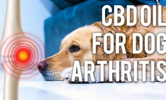CBD Oil for Dog Arthritis (Quick Answers) 4