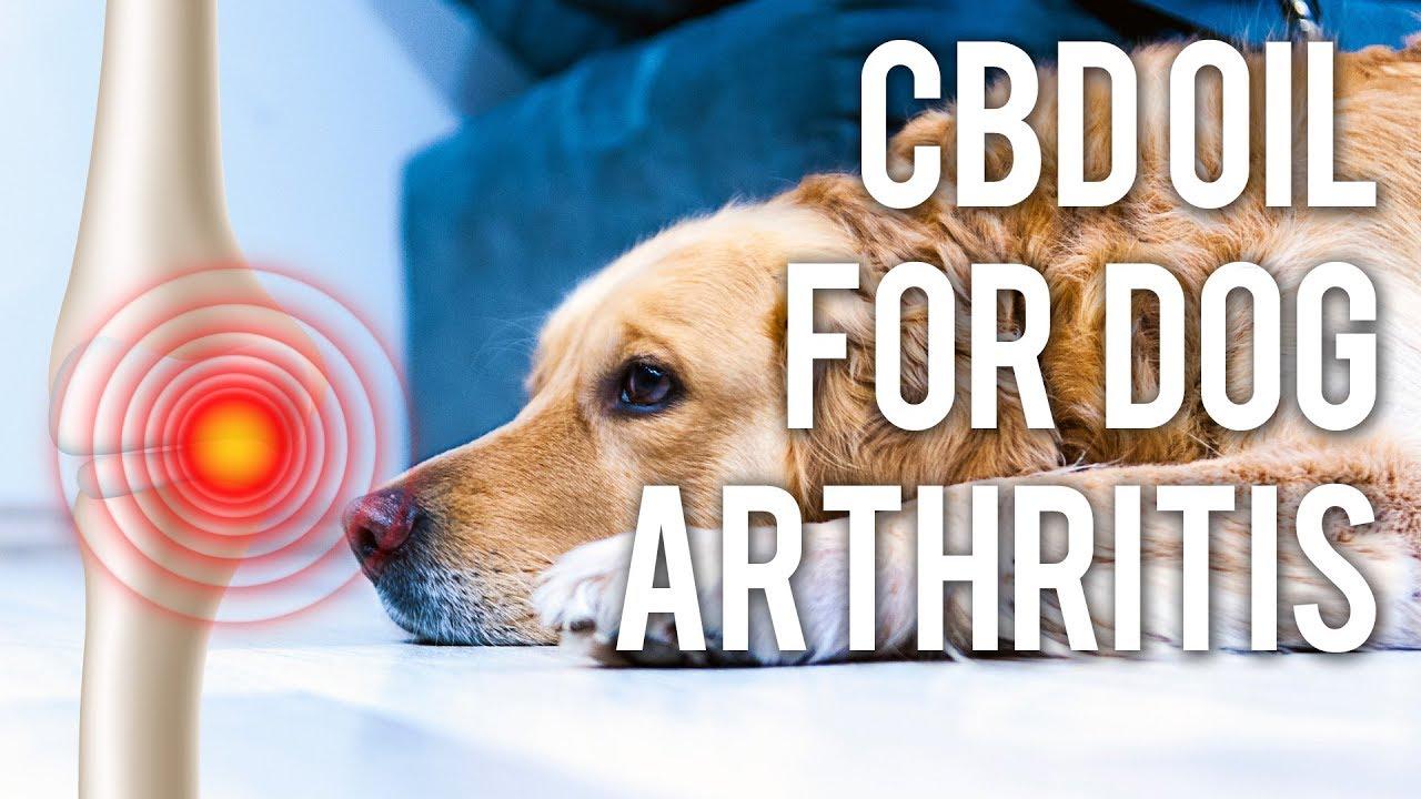 CBD Oil for Dog Arthritis (Quick Answers) 1
