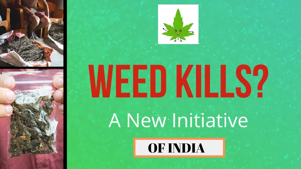 Harmful effects of Laced weed   In Mumbai   Stoner Tips 1