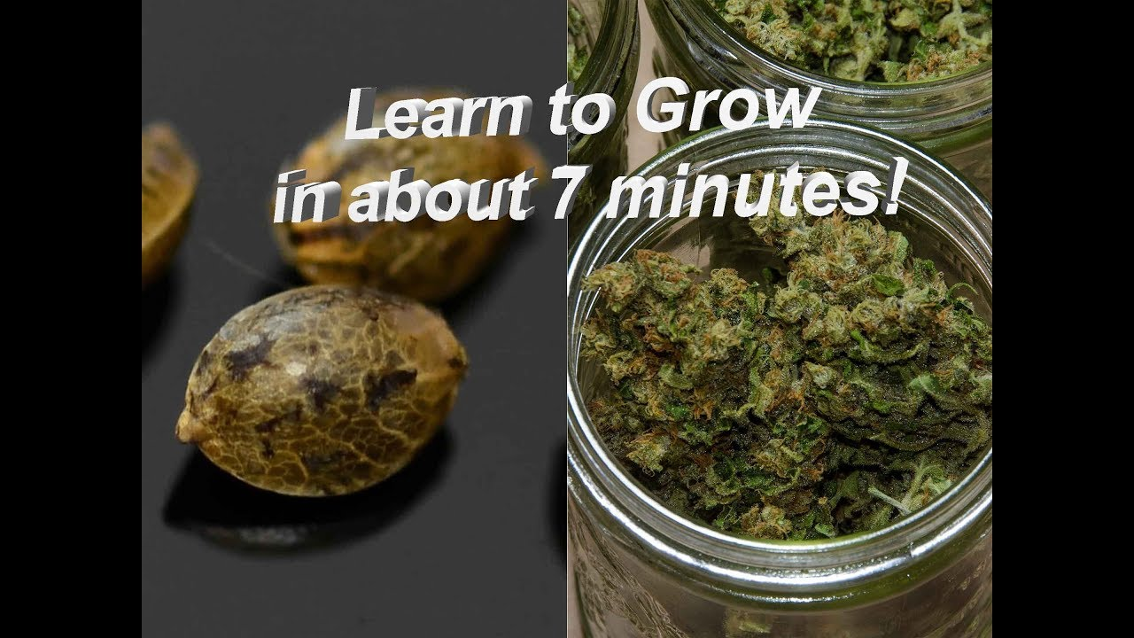 Learn how to grow weed in under 7 minutes! 1