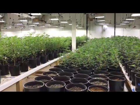 "Police bust multimillion-dollar marijuana ""fortress"" 1"