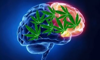 How do marijuana affect our brain(in hindi) 6