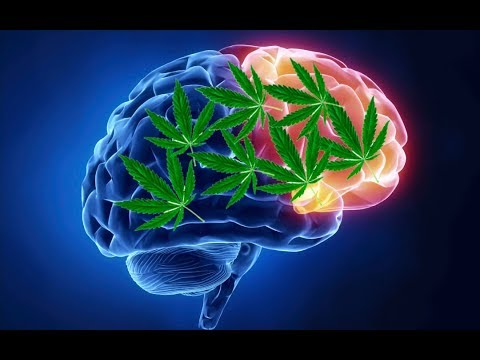 How do marijuana affect our brain(in hindi) 1