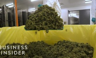What It's Like Inside A Canadian Marijuana Greenhouse 6