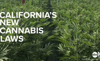 California's New 2019 Cannabis Laws Explained | Pot Convictions & Marijuana Marketing 10