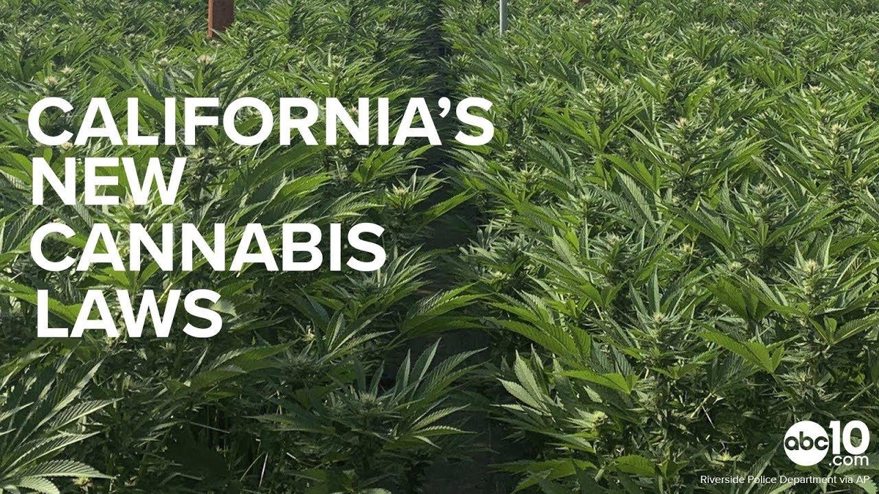 California's New 2019 Cannabis Laws Explained | Pot Convictions & Marijuana Marketing 1