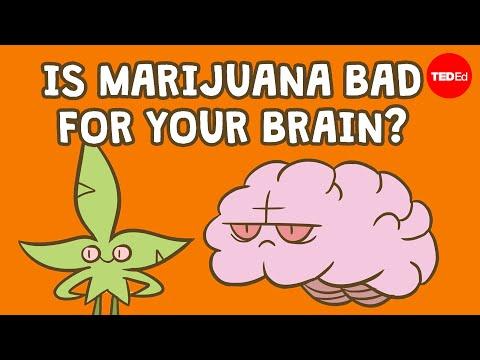 Is marijuana bad for your brain? - Anees Bahji 1