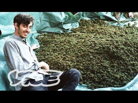 Swaziland: Gold Mine of Marijuana (Part 1/2) 1