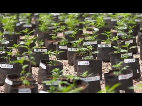 Recreational marijuana may soon be available in Arizona 1