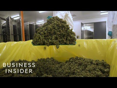 What It's Like Inside A Canadian Marijuana Greenhouse 1