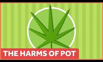 The Harms of Marijuana 2