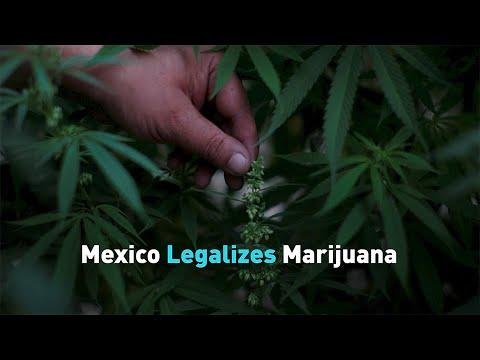 Mexico Legalizes Marijuana 1