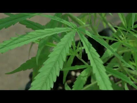 New York is set to legalize marijuana 1