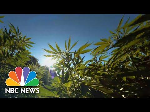 New York Agrees To Legalize Recreational Marijuana | NBC News NOW 1