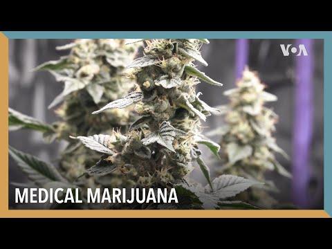Medical Marijuana | VOA Connect 1