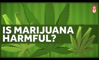 Is Marijuana Harmful to Health? 3