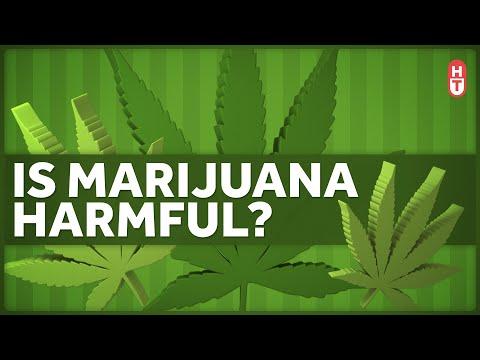 Is Marijuana Harmful to Health? 1