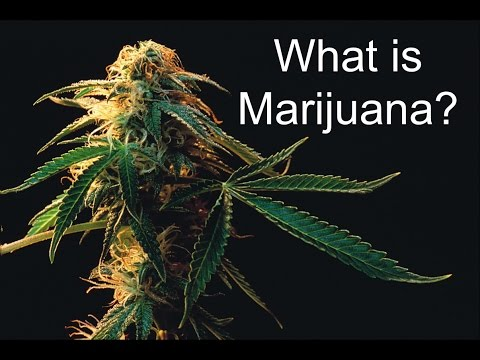 What is Marijuana? 1