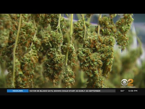 Legalized Recreational Marijuana In New York Paves Way For Revenue Being Re-Invested Into Minority C 1