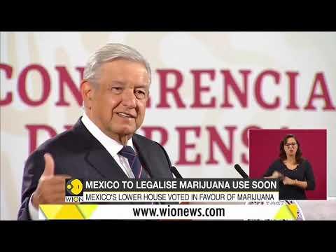 Mexico to legalise Marijuana use soon | Mexico upper house | Cannabis | Latest World English News 1