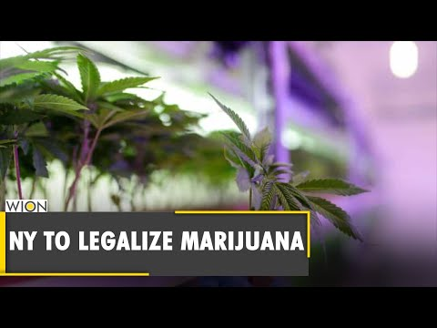 New York reaches agreement to legalize recreational marijuana | Andrew Cuomo | Latest English News 1