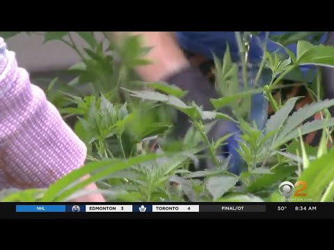 Lawmakers Reach Deal To Legalize Recreational Marijuana In New York 1