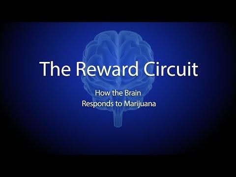 The Reward Circuit: How the Brain Responds to Marijuana 1
