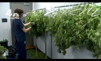 Inside a Virginia Marijuana Grow and Dispensing Operation 8