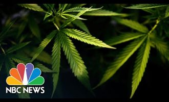Virginia Becomes First Southern State To Legalize Marijuana | NBC News NOW 5