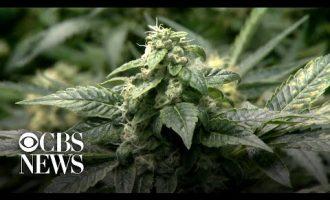 New York state legalizes recreational marijuana 2