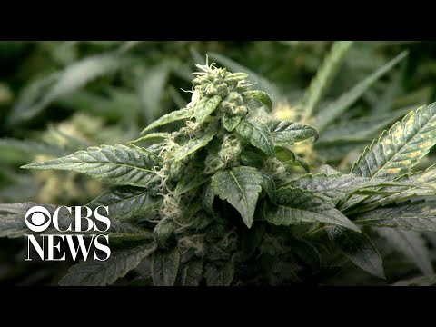 New York state legalizes recreational marijuana 1