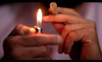 Curaleaf Expects Major Growth of Legal Marijuana in U.S. 8