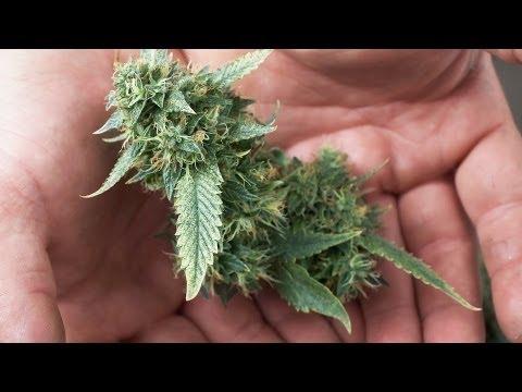 Does Marijuana Cure Glaucoma? | Marijuana 1