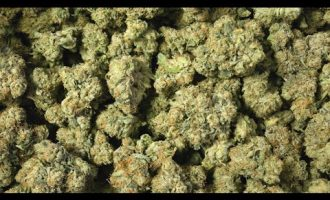 Virginia legalizes the recreational use of marijuana 1
