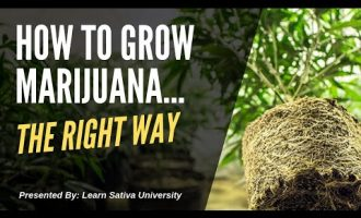 How to Grow Marijuana (Step-By-Step) Week One 5