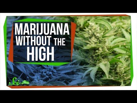 CBD: Marijuana Without the High 1