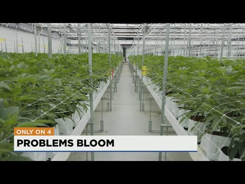 Missouri medical marijuana patients reaching major milestone despite many doctors still banned from 1