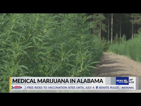 VIDEO: Medical Marijuana in Alabama 1