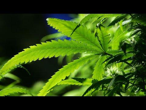 Floor vote expected on recreational marijuana legalization in Minnesota 1