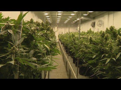 Survey shows Republican suppport for legalizing Marijuana 1