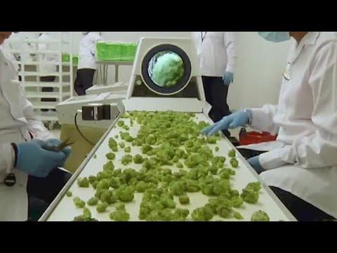 Texas legislature considers marijuana legislation I FOX 7 Austin 1