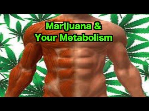 Marijuana & Your Metabolism 1