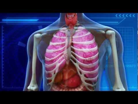 Smoking marijuana does not harm lungs: study says 1